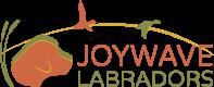 Joywave Labrador